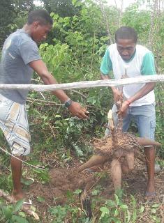 Projeto no Piauí demonstra que Reforma Agrária é saída para ex-escravizados