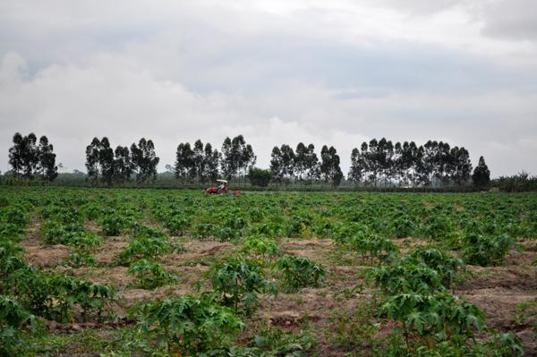 Reforma Agrária: Luta, reforma e produção no Espírito Santo
