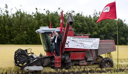 Assentados realizam a 10ª Abertura da Colheita do Arroz Agroecológico, no RS