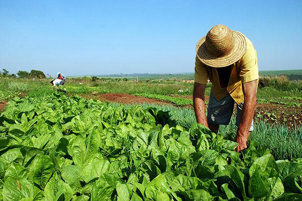 Reforma Agrária popular, por terra e soberania alimentar