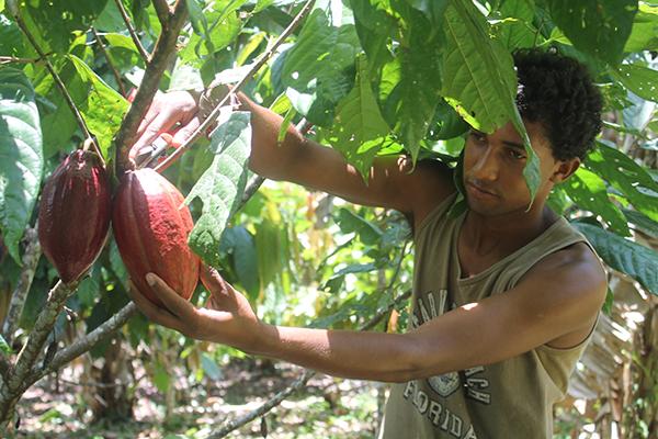 Certificação de orgânicos dificulta chegada de produtos no mercado