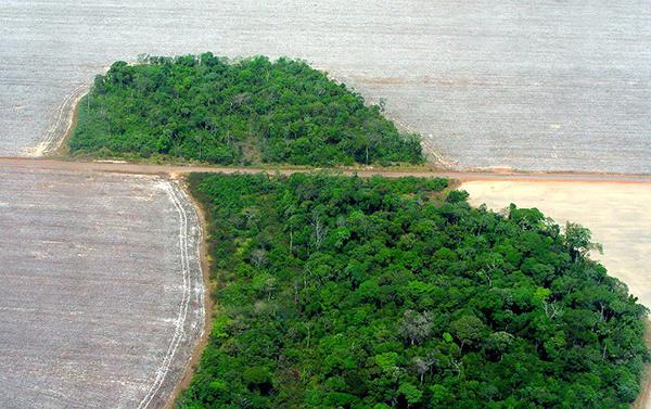 Desafio histórico, contenção do desmatamento confronta atual modelo