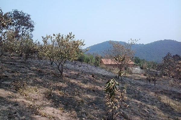 Depois de incêndio, famílias lutam para retomar produção no assentamento