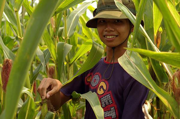 Após Agente Laranja, Monsanto reencontra Vietnã com transgênicos