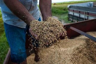 Agricultura familiar vende mais de 7 milhões de quilos de produtos
