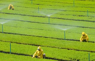 Plantações Geneticamente Modificadas: ficção corporativa
