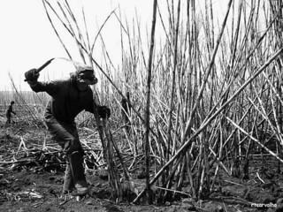 Direitos ainda são violados 52 anos após estatuto do trabalhador rural