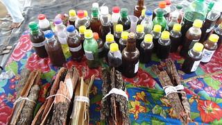Na Bahia, agricultores Sem Terra iniciam produção de plantas medicinais
