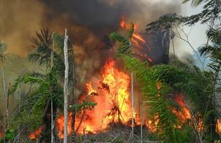 Incêndios criminosos impedem regeneração florestal em terra indígena