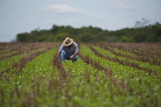 Pesquisa inédita no Semiárido aponta como agricultores enfrentam a seca
