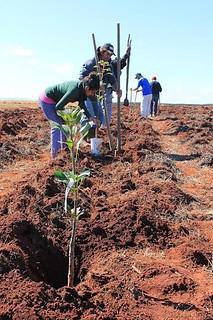 Projeto traz alternativas para a agricultura camponesa no Paraná