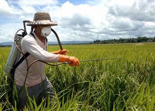 Agrotóxicos e agroecologia, diferentes paradigmas em disputa