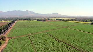 Relatório mostra aumento na concentração de terras do Brasil