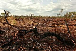 Problemas hídricos no Cerrado podem afetar importantes setores da economia