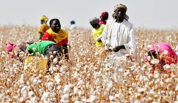 agricultura-no-sudao.jpg