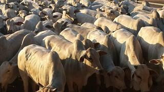 JBS comprou gado da família do maior desmatador da Amazônia