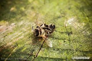 Monoculturas e agrotóxicos são as causas do sumiço das abelhas