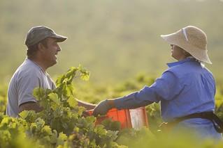 Terceirização pode trazer ainda mais informalidade a trabalhadores rurais