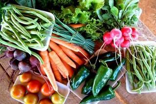 Incentivar a agricultura familiar é o primeiro passo para erradicar a fome