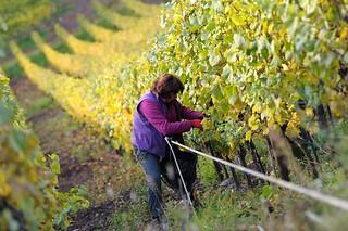 Com pressão da sociedade, França avança na proibição de agrotóxicos