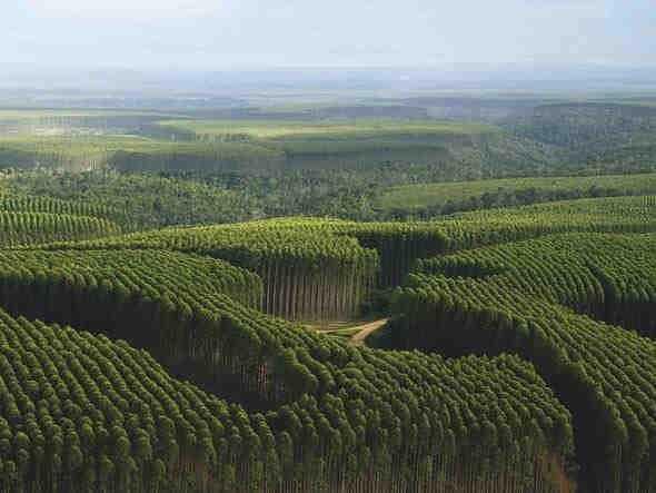 Expansão da floresta industrial gera desemprego e êxodo rural no RS