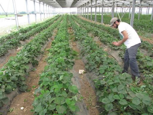 Em Roma, cooperativa produz alimentos e desenvolvimento social dentro da cidade