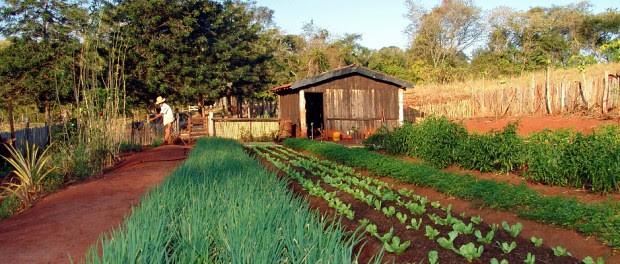 A agroecologia como modelo ideal de produção de alimentos