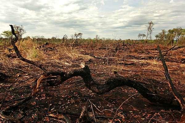 Em nome do lucro, Kátia Abreu e cia decretam a extinção do Cerrado