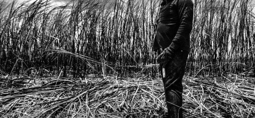 Empresários paulistas são denunciados por trabalho escravo em MG