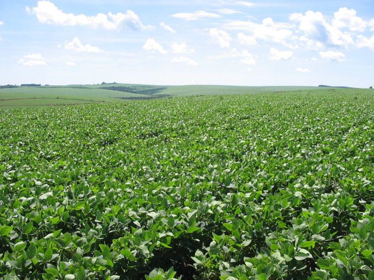 Os campos do Sul vão virar uma grande lavoura de soja?