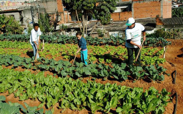 Agricultura urbana, ativismo e direito à cidade