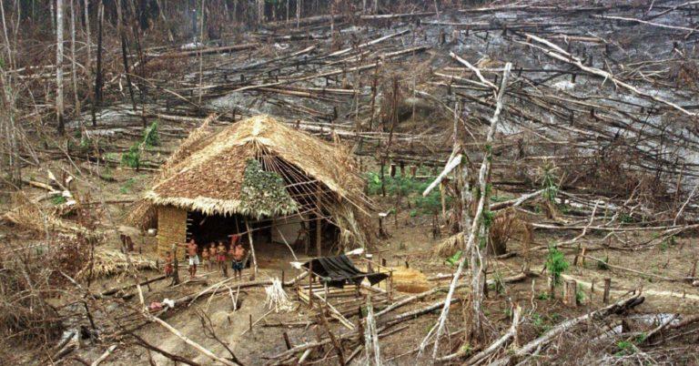 Amazônia: agir com sabedoria é agir a favor da terra