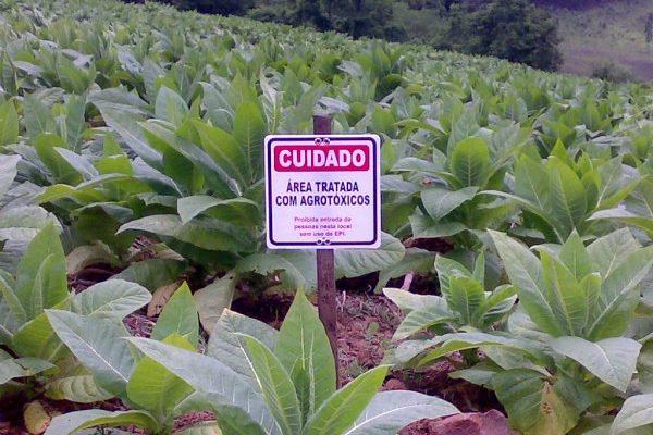 Agrotóxicos: quem deve decidir seu uso?