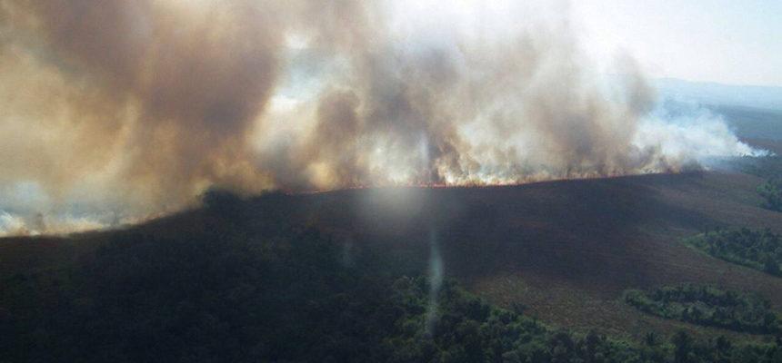 Sem Terra acreditam que incêndio ao redor de acampamento no PR tem origem criminosa