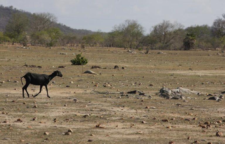 Desmatamento silencioso da Caatinga tem intensificado a desertificação do semiárido brasileiro