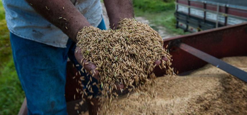 MST realiza seminário estadual sobre arroz agroecológico