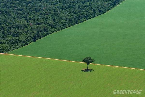 """""""Dói minha alma quando há desmatamento para plantar a soja"""", diz Papa"""