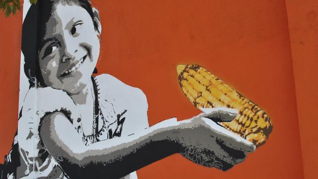 México: Guerra suja contra os povos do milho