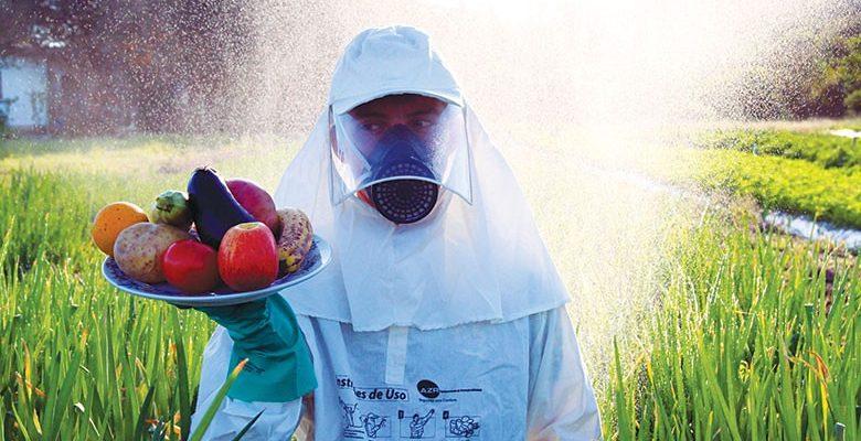 Comida ou veneno? Produção orgânica se viabiliza como garantia de soberania alimentar