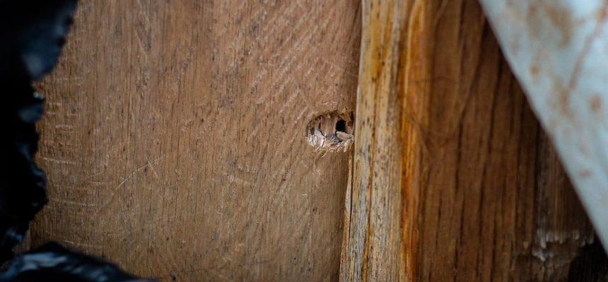 Pistoleiros atacam a tiros acampamento do MST no Paraná