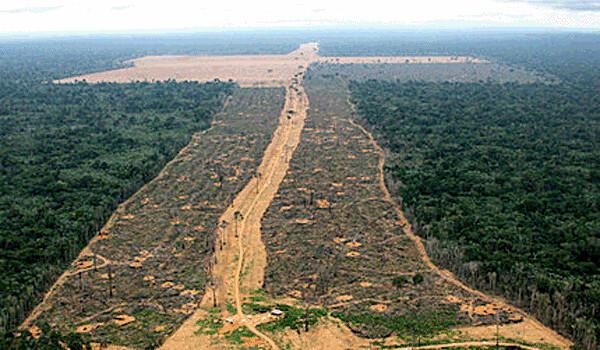 Amazônia: o poder dos piratas do agronegócio