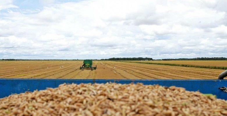 Controle da soja por brasileiros no Paraguai provoca desigualdades, aponta especialista