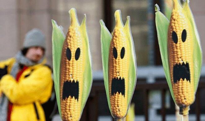 Ruralistas tentam aprovar sementes estéreis