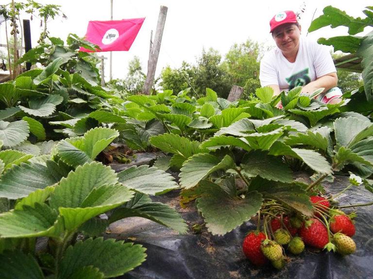 um modo de vida de assentadas da Reforma Agrária