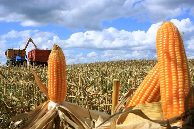 Brasil pode ser o primeiro País a liberar sementes estéreis