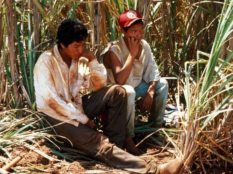 Os efeitos da cana-de-açúcar na vida dos povos indígenas do Mato Grosso do Sul