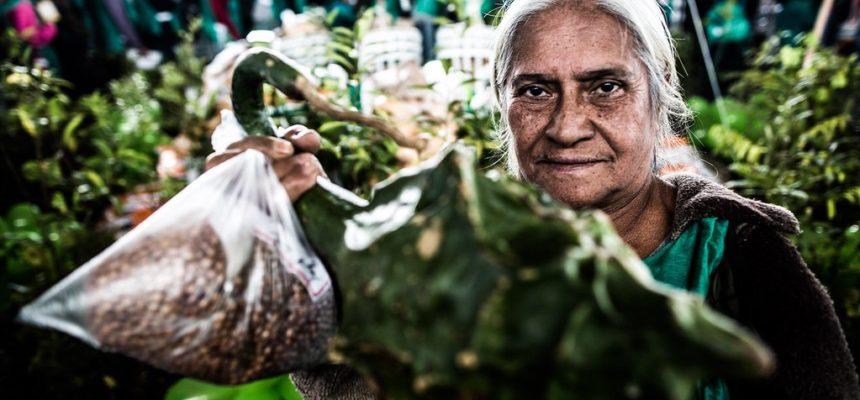 No Paraná, experiências comprovam que produção agroecológica é possível