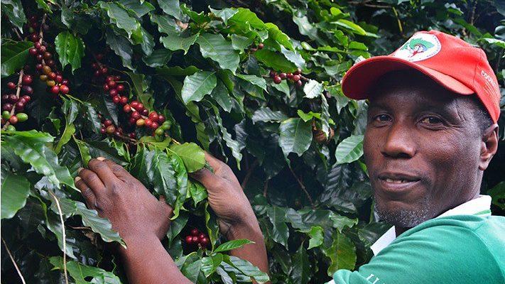 Comida de Verdade estreia e traz produção do café na Reforma Agrária Popular