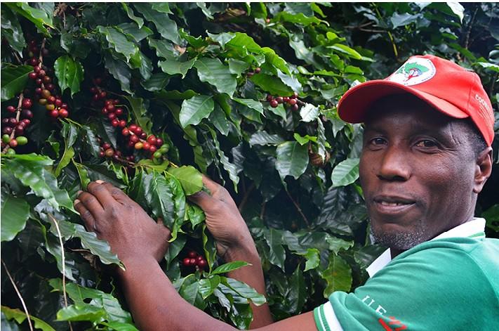 Sem Terra traçam novo ciclo na produção de café