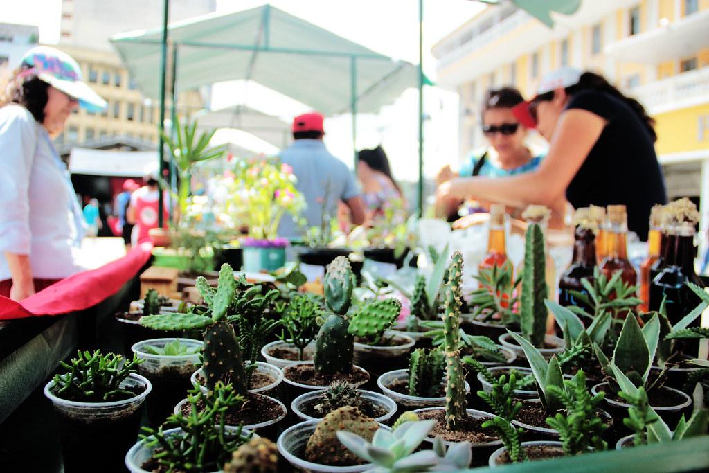 Feira Estadual de  Produtos da Reforma Agrária_MST-PB_foto Thaís Peregrino_IMG_7846.jpg